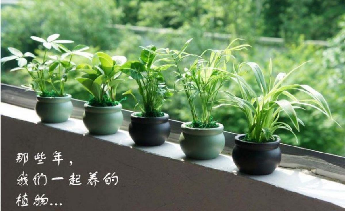 这些绿植可以净化二手烟雾